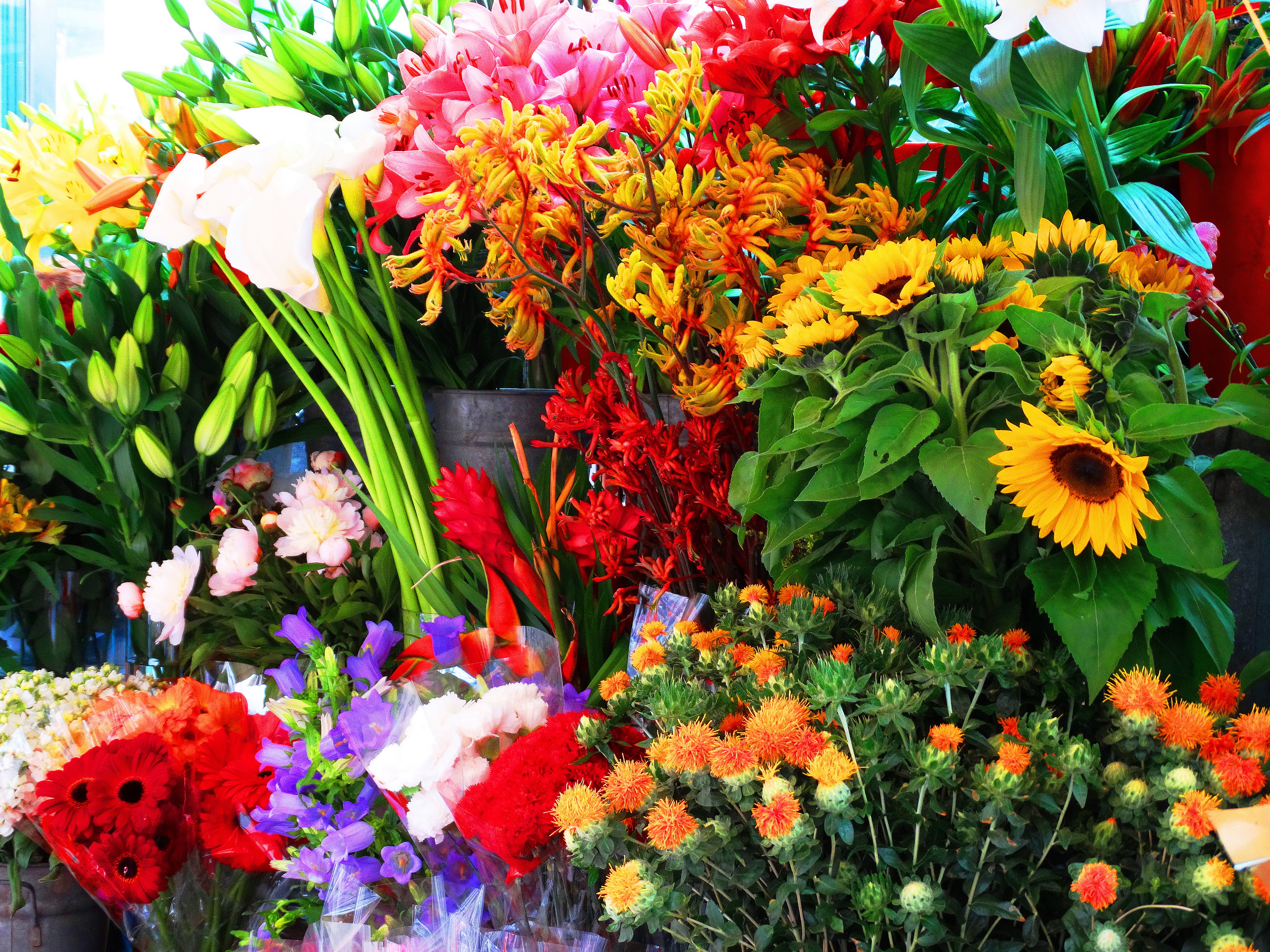 the gorgeous flowers of europe