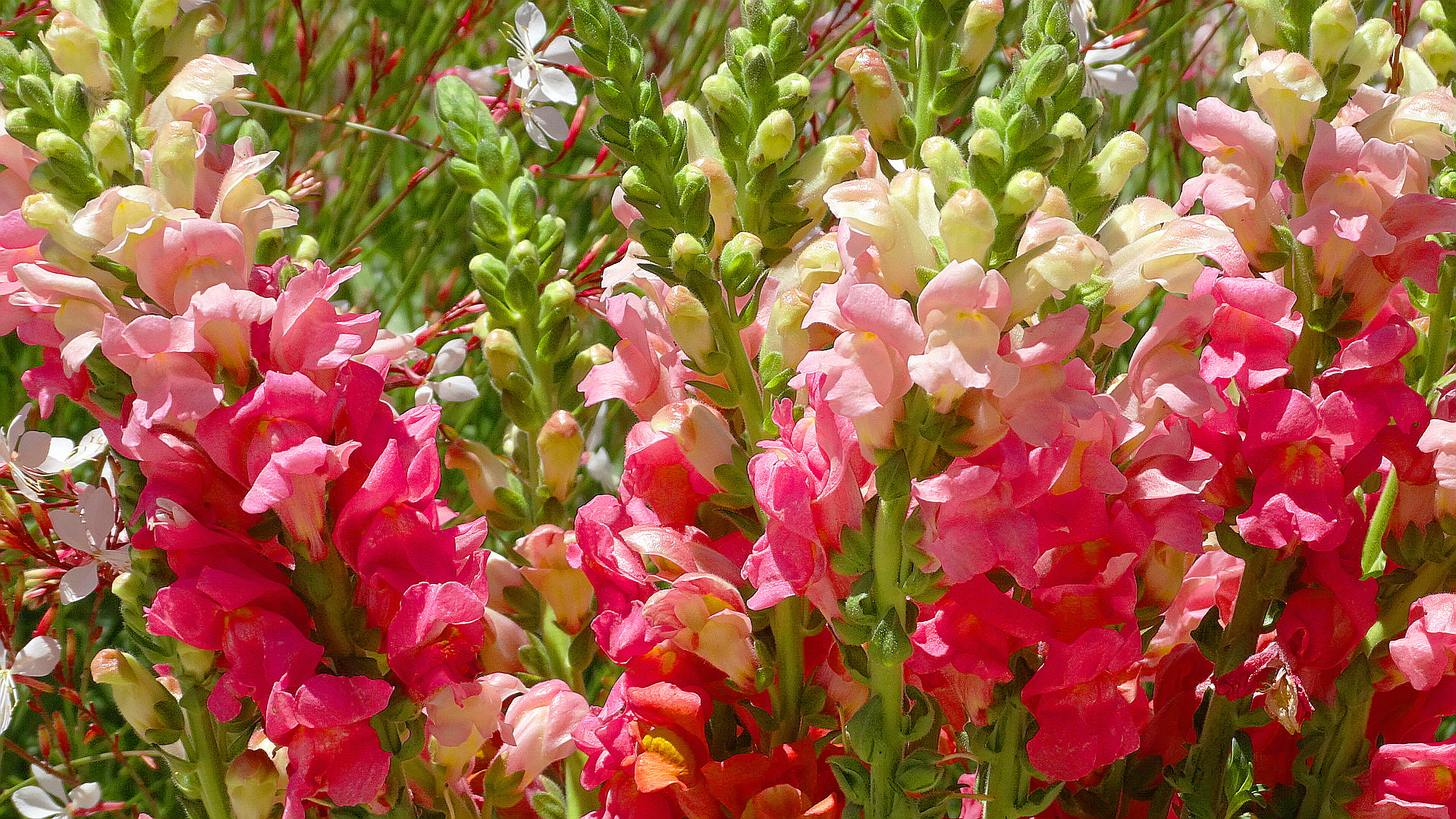 Snapdragon Photos