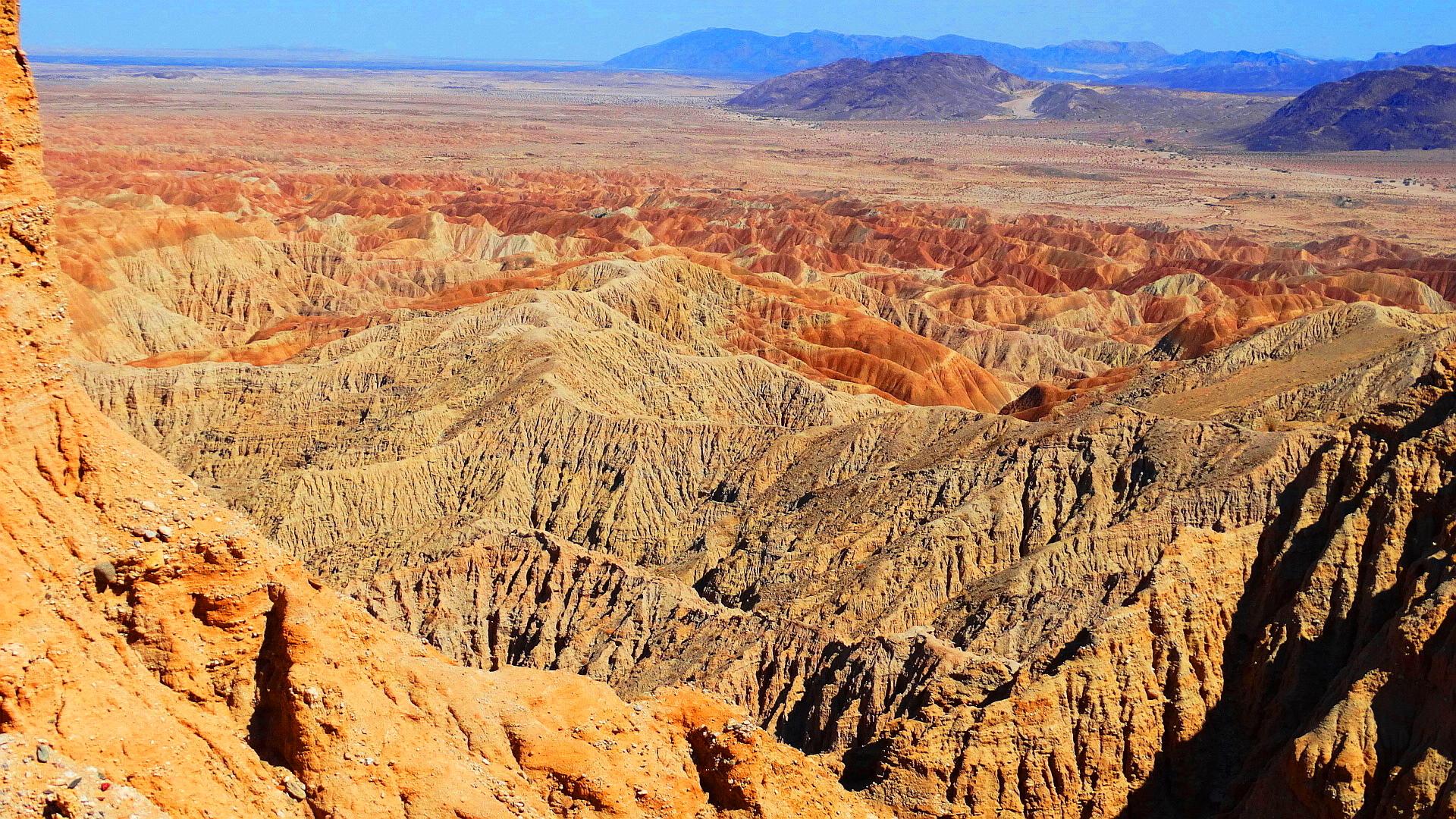 summer wildlife anza borrego desert state park