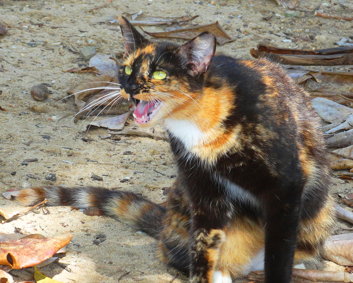 Can You Kill Feral Cats In Texas