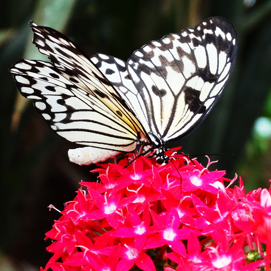 san diego safari park butterfly jungle
