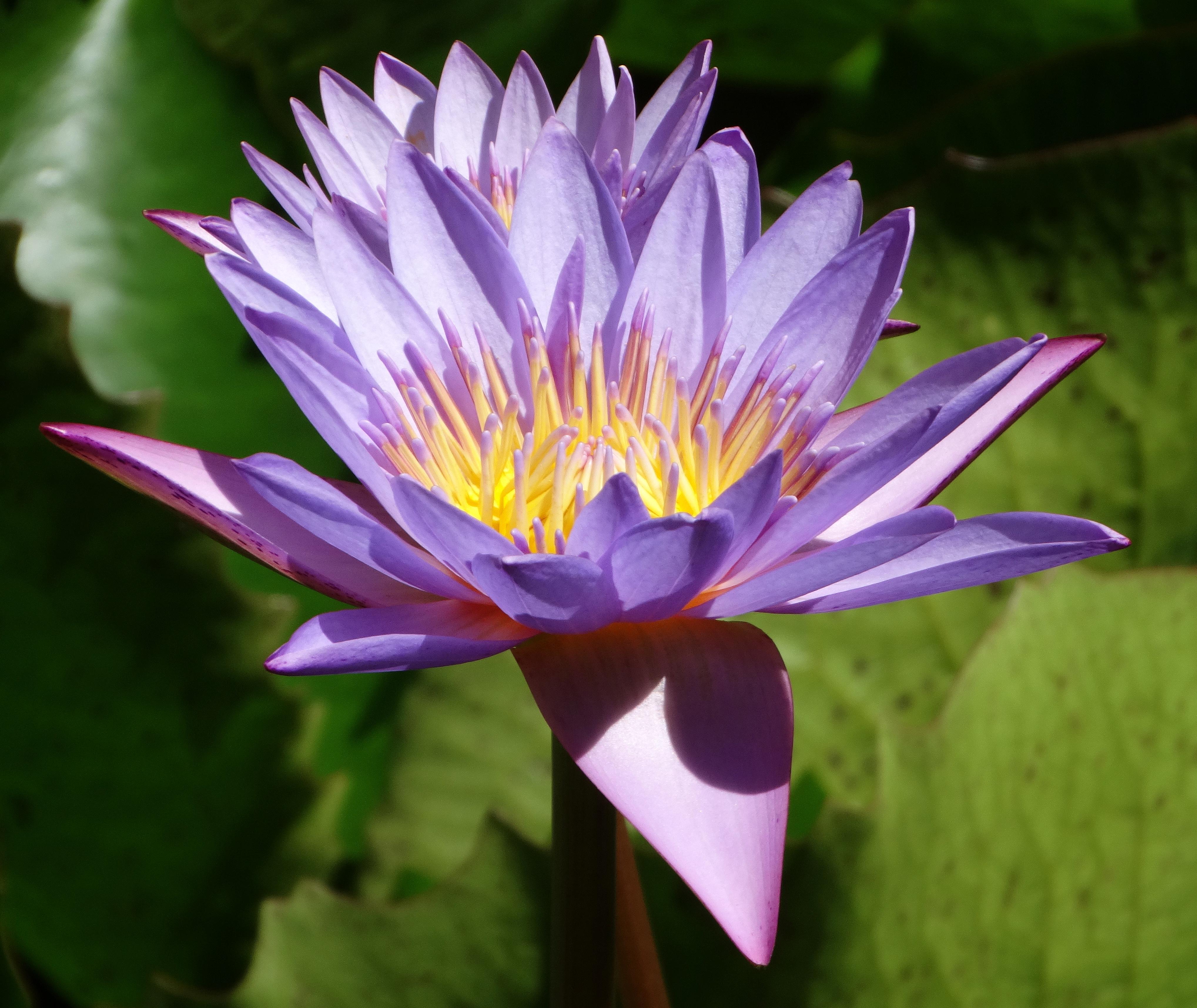 Raiatea s remarkable flora fauna for Floar meaning
