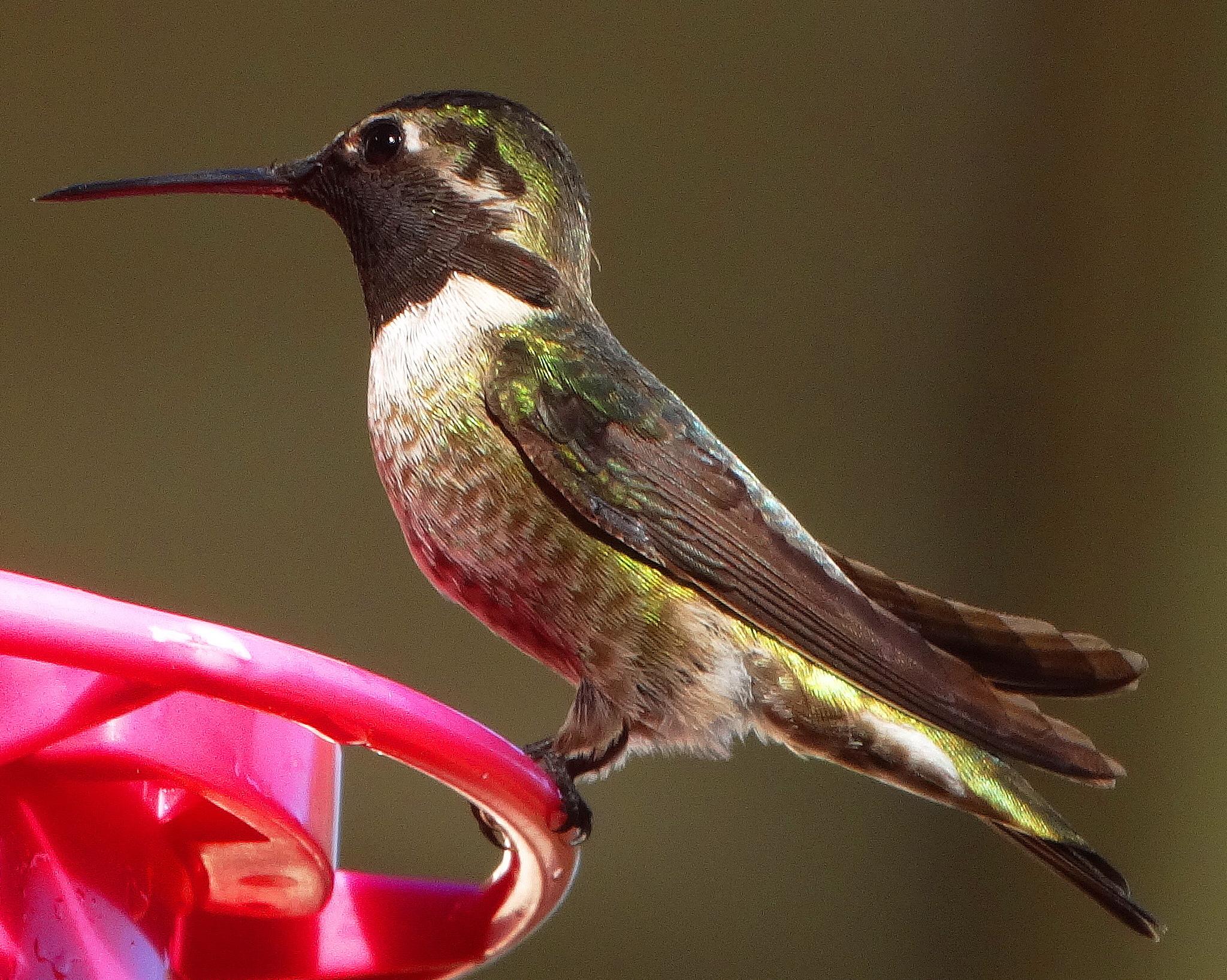how to make hummingbird feed