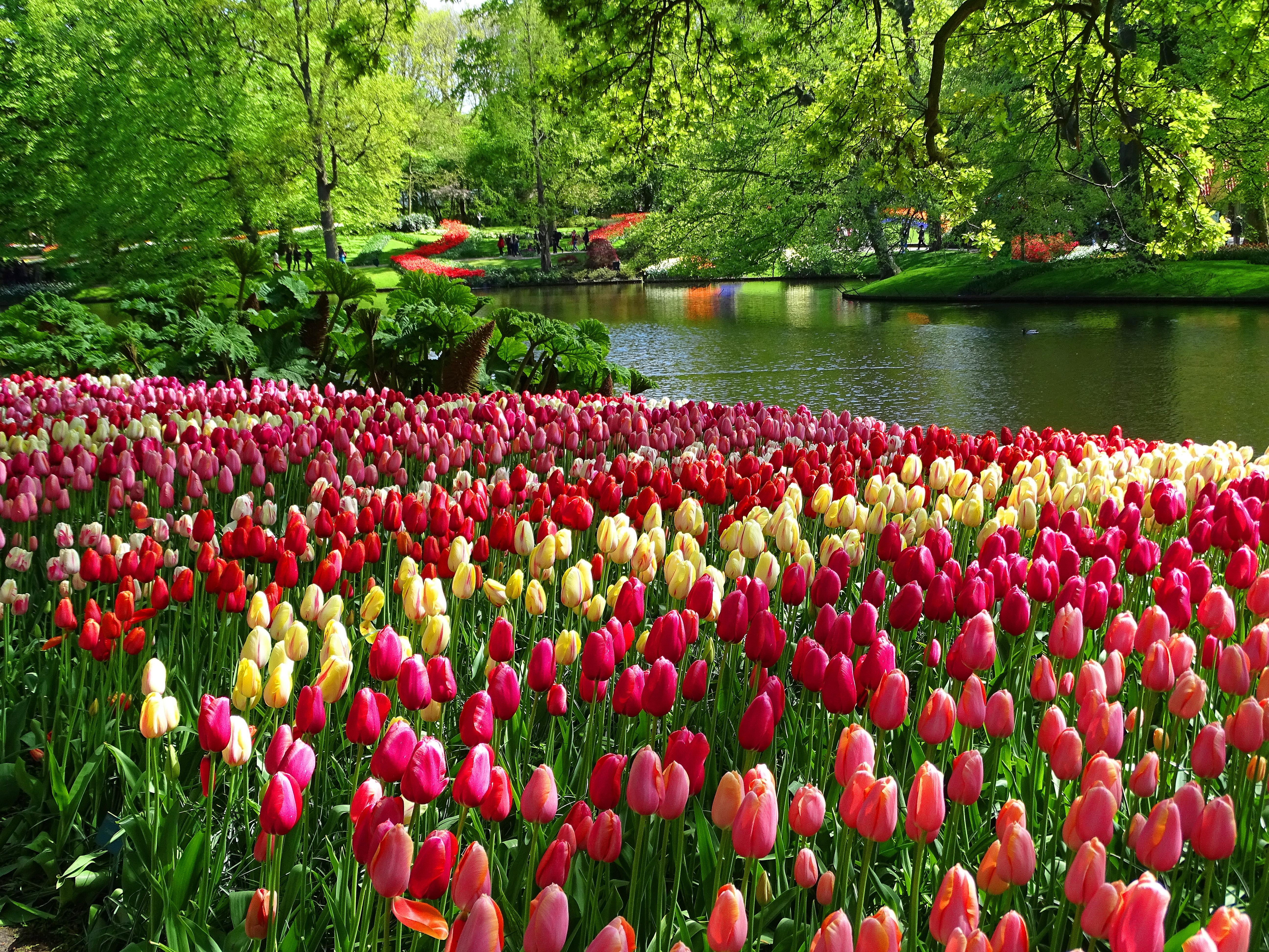 Keukenhof Tulip Gardens Address Garden Ftempo