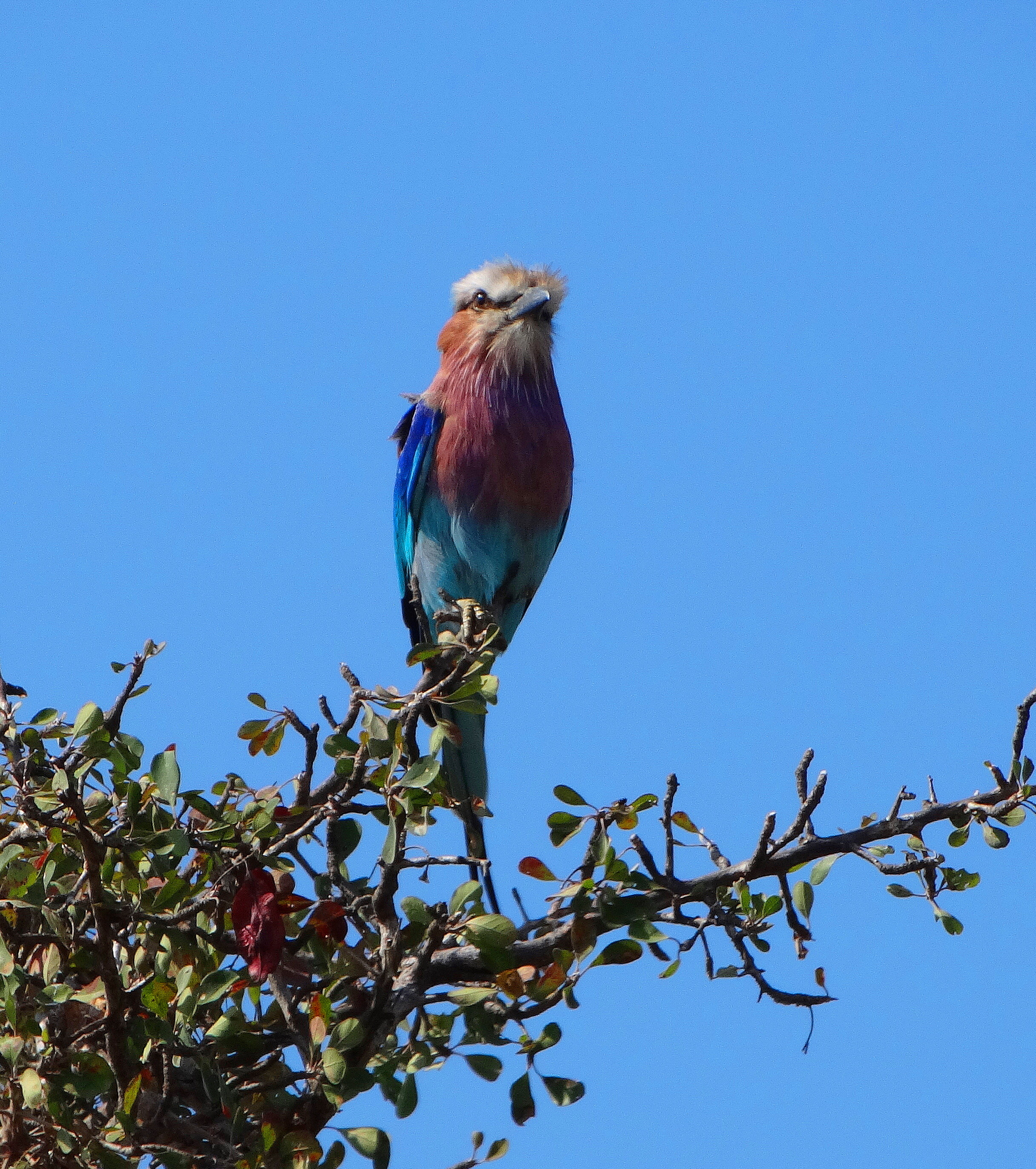 South African Wild Birds