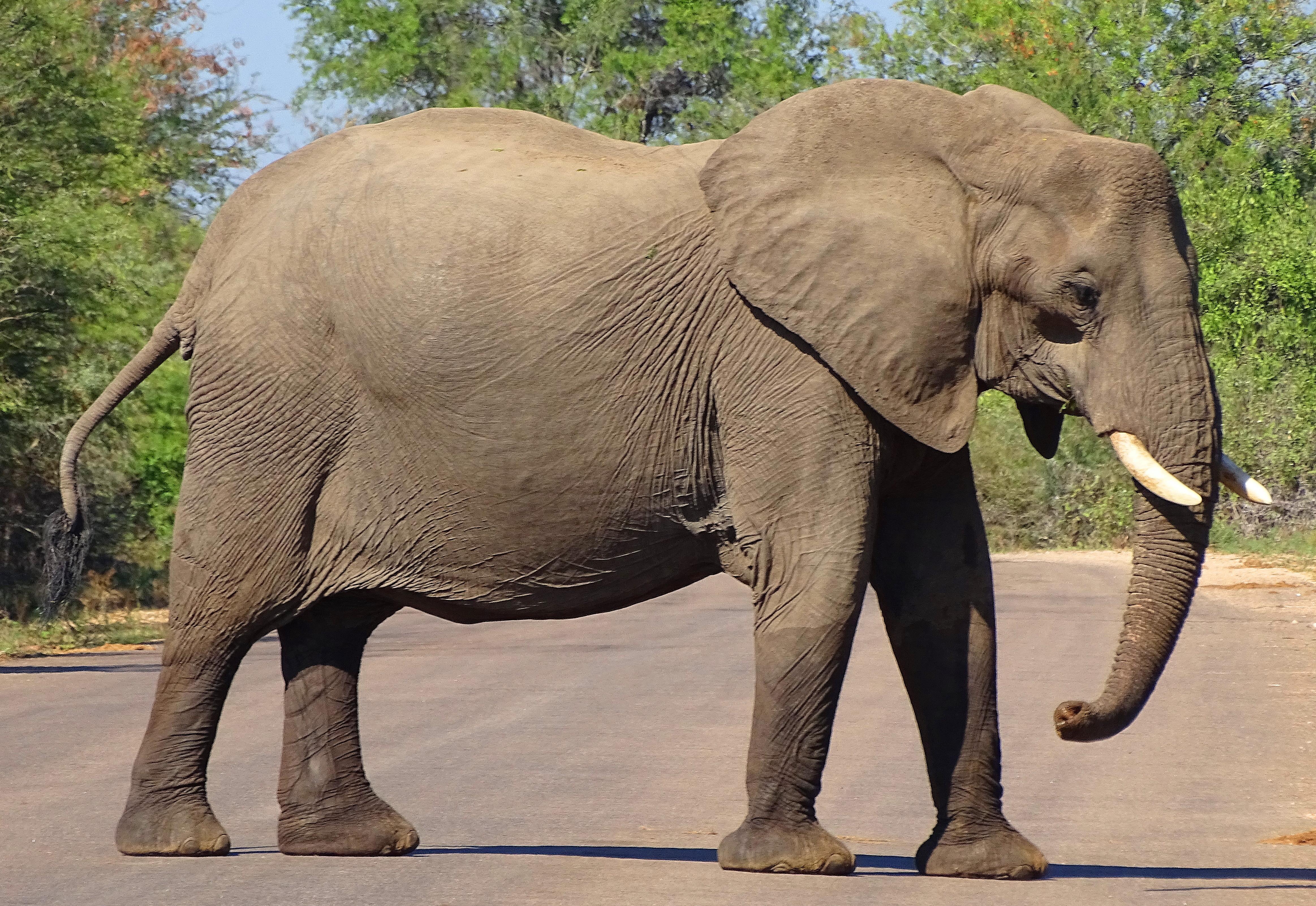 Sri Lanka probes deaths of wild elephants
