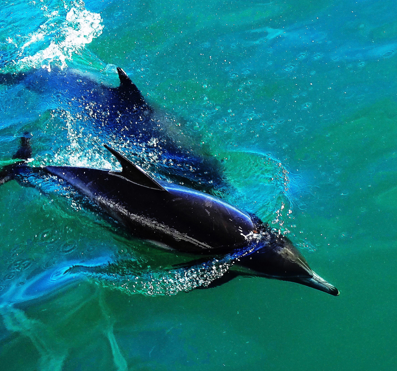 всех фото разновидности дельфинов проект ужин небесах
